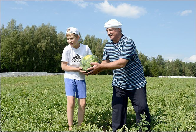 Беларусь в текущем году рассчитывает навысокий урожай арбузов— Минсельхоз